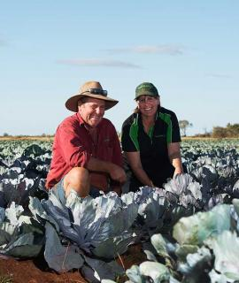 Couple tending to cabbage in a paddock