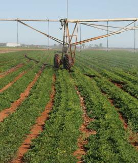 Irrigating a crop