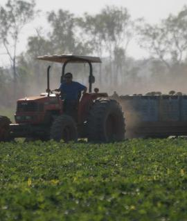 Tractor and trailers in vegetable field