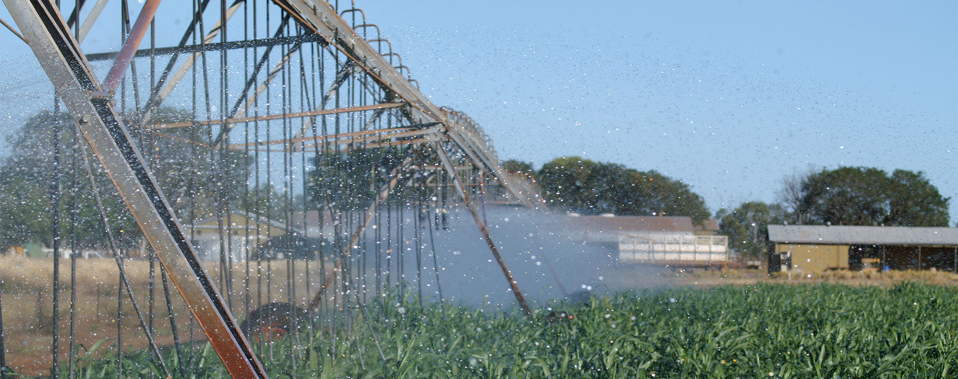 Crop being irrigated