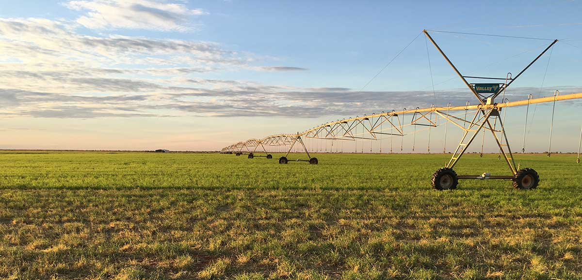Irrigating a paddock